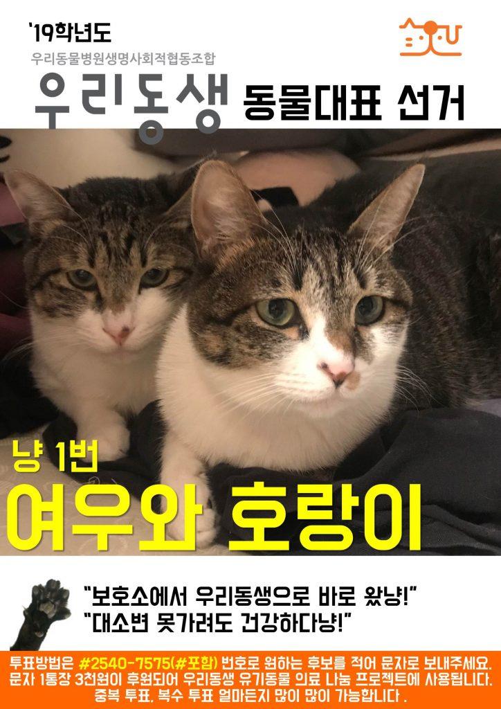 냥1_동물대표 출마_여우와호랑이