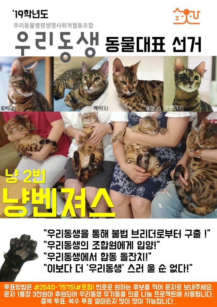 냥2_2동물대표 출마_냥벤져스