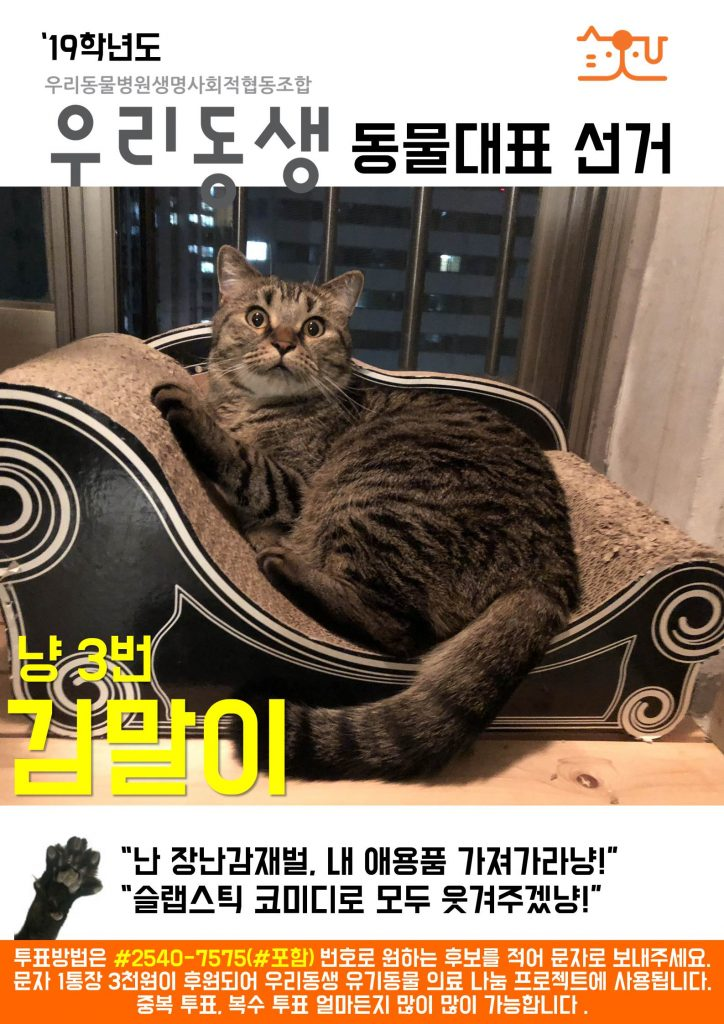 냥3_동물대표 출마_김말이