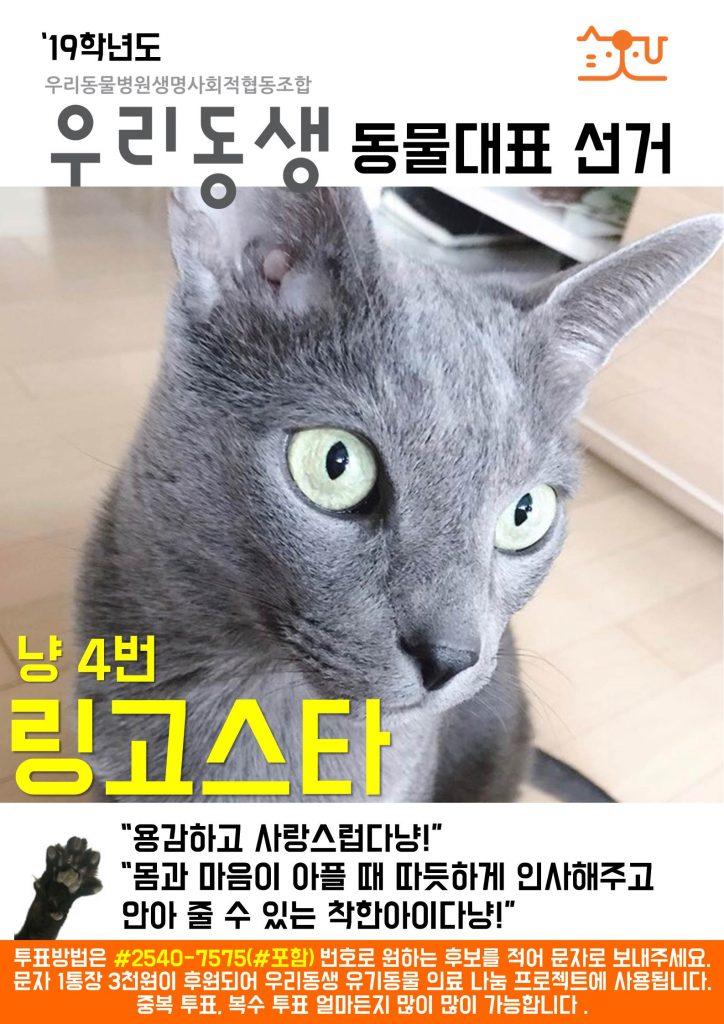 냥4_동물대표 출마_링고스타